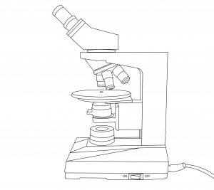 fiche vierge microscope geol