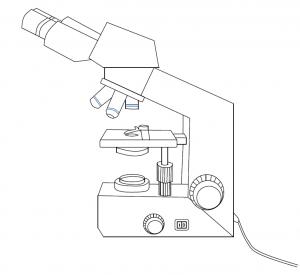 Fiche vierge microscope bio